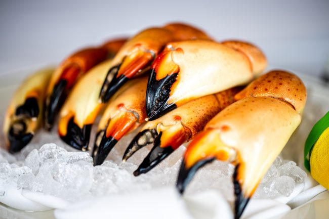 picture of Florida Stone Crab Claws on ice close up photo.
