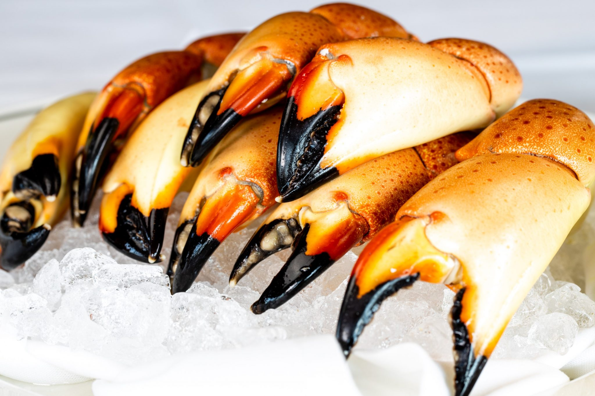 picture of Florida stone crab claws on a bed of ice