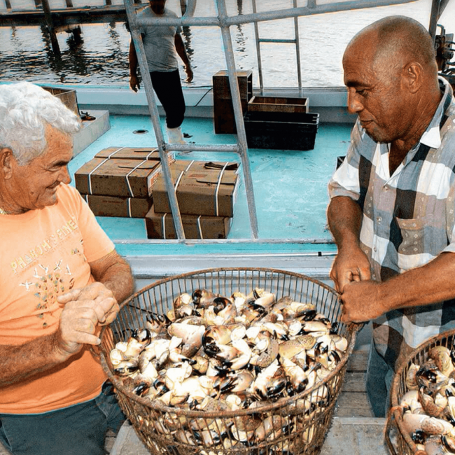 picture of stone crab fishermen holding a basket of fresh stone crab claws
