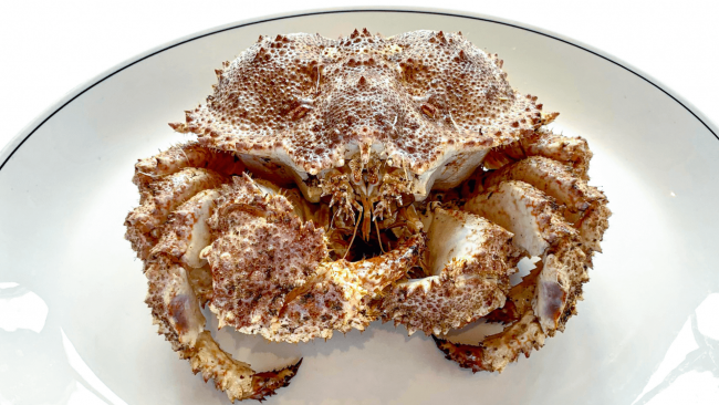 picture of a box crab