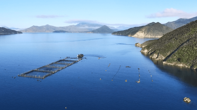picture of Ora King Salmon fishery