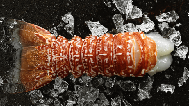picture of a South African lobster tail with ice chunks in the background