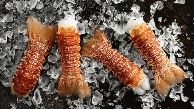 picture of four South African lobster tails with large chunks of ice in the background