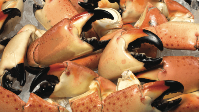 picture of fresh Florida stone crab claws