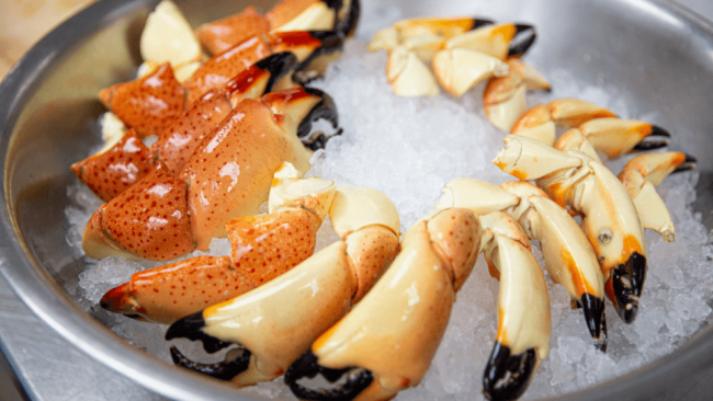 picture of fresh Florida stone crab claws on ice
